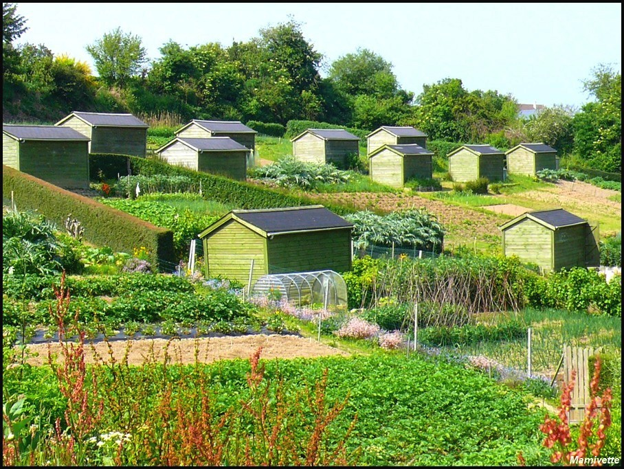 Le spectaculaire succ s des jardins familiaux agoravox for Jardin familiaux