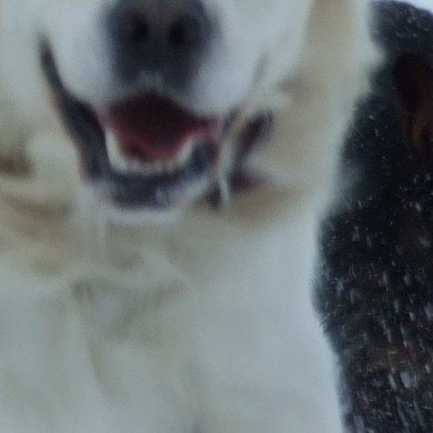 Vivre comme des chiens – AgoraVox le média citoyen