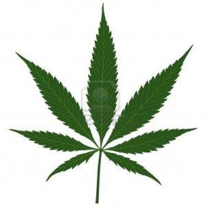 Et Finalement Le Cannabis Pour Ou Contre Agoravox Le Media Citoyen