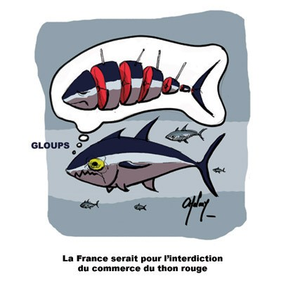 La pêche du thon rouge en question