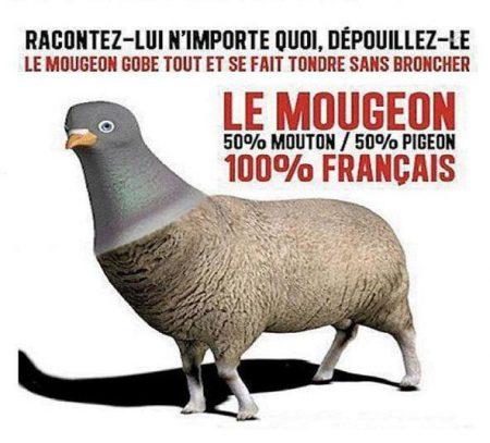 Vox Populi - Page 33 Le-mougeon1-e1463904298808-ea9ea
