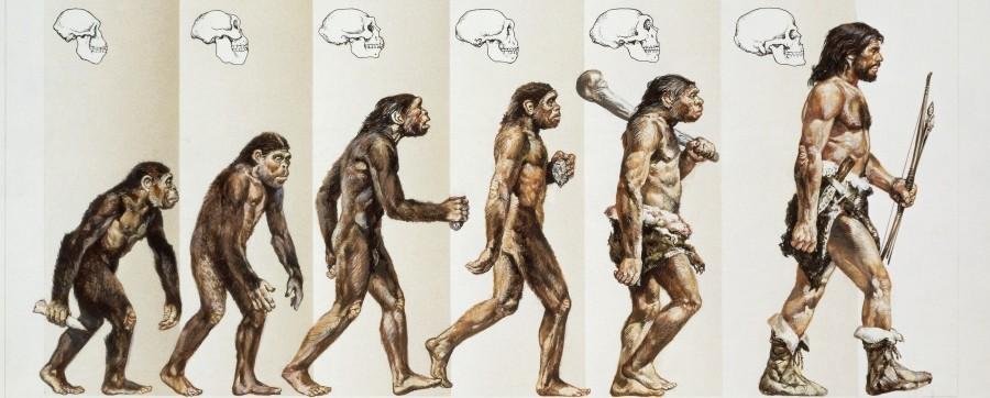 Dieu Le Creationnisme Et La Theorie De L Evolution Agoravox Le