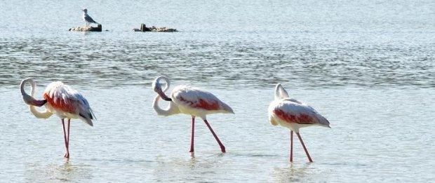 pollution par les mines d'extraction de lithium au Chili, désert d'Atacama, lagune, réserve naturelle de flamants roses
